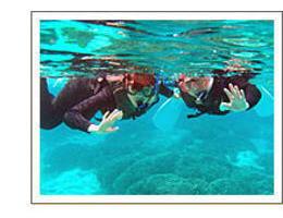 シュノーケリングで水中の世界へ