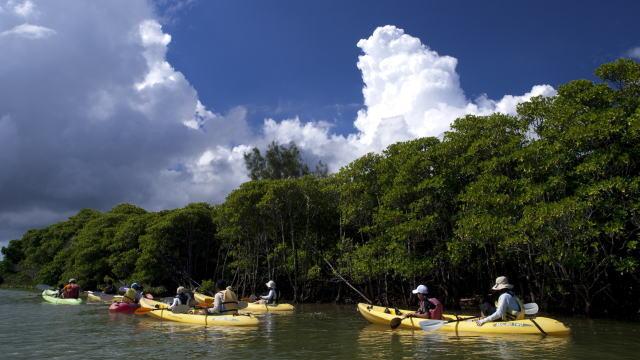 沖縄 マングローブ探検カヤックツーリング&ローカルビーチ上陸探索ツアー